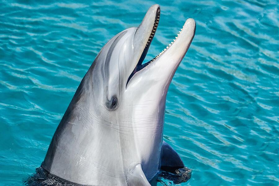 dolphin paleochora crete