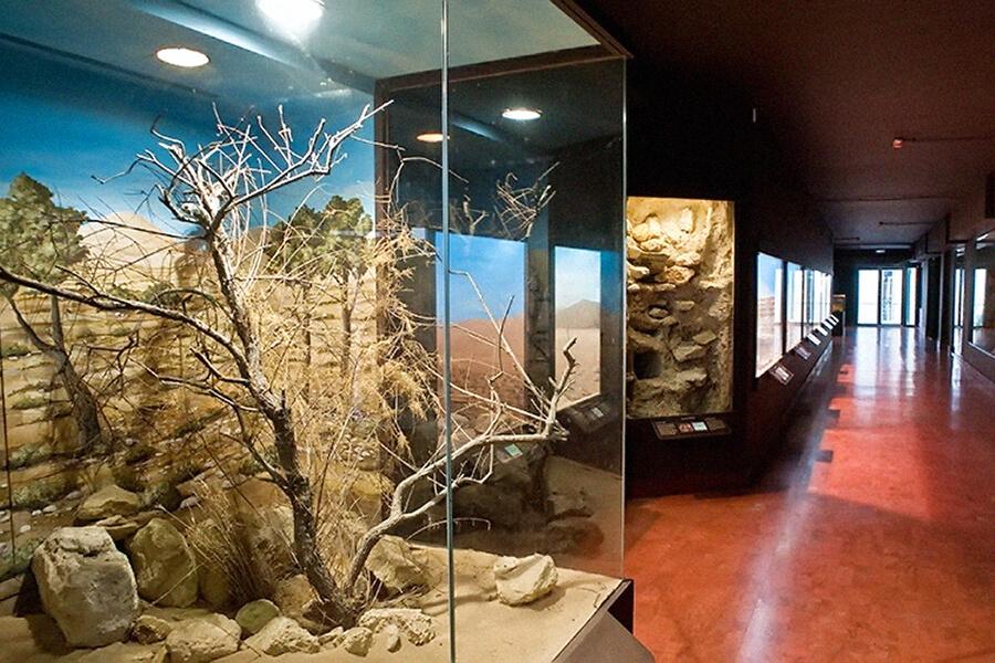 natural history museum heraklion